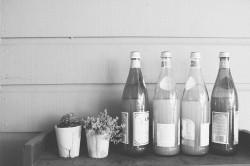 Handmade series: feijoa wine
